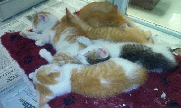 Kittens-12-18